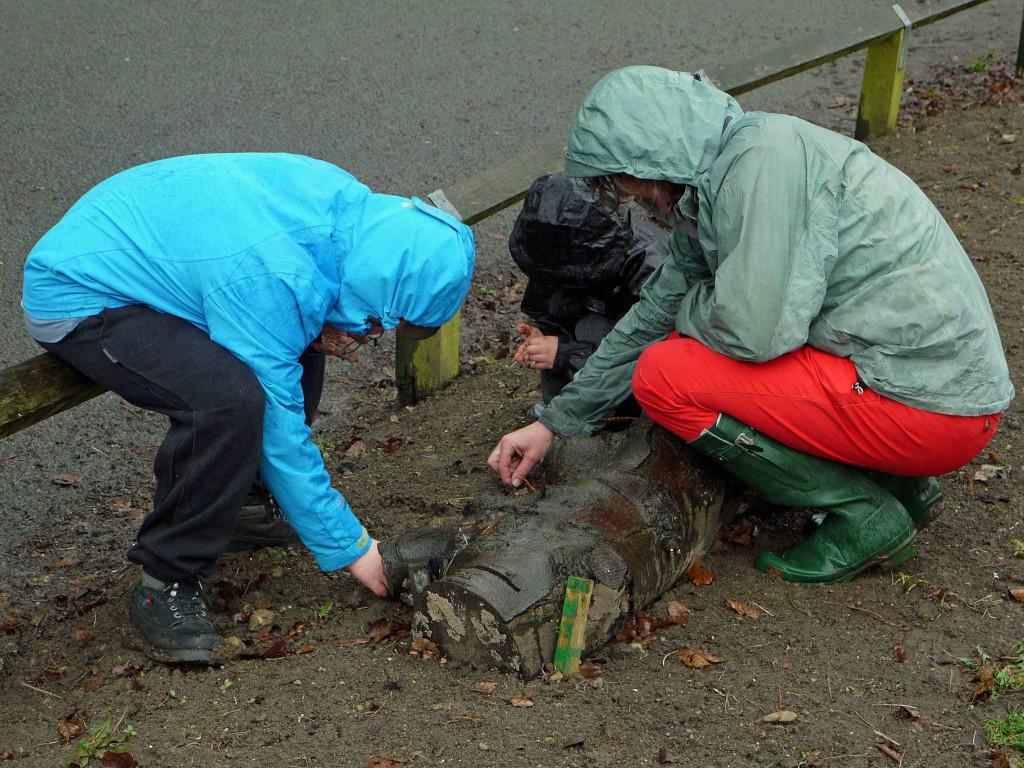Planting seeds 1